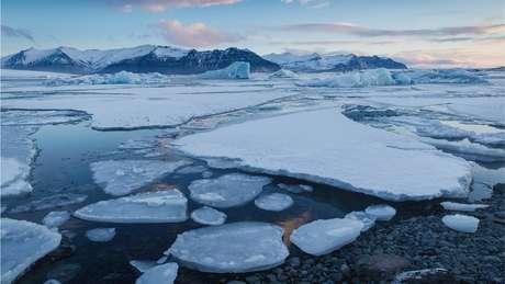 O aquecimento global pode ser o principal inimigo dos tardígrados