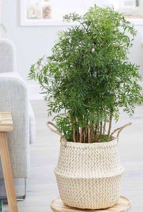 7. Plantas de sombra, como a árvore da felicidade, são lindas em vasos – Via: Decor Fácil