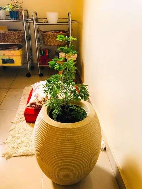 43. Plantas de sombra árvore da felicidade – Via: Pinterest