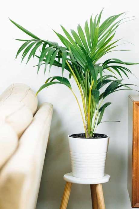 44. Plantas de sombra para sofá – Via: Pinterest