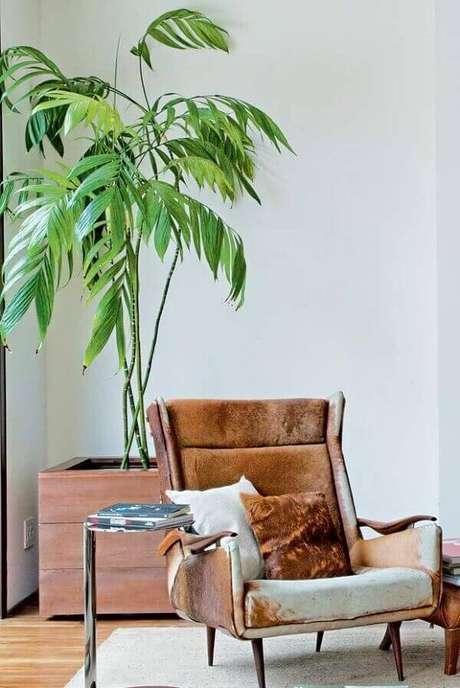 13. Plantas ornamentais de sombra para decorar sala de estar do tipo Camedorea Elegante, uma das mais lindas plantas de sombra – Via: Pinterest