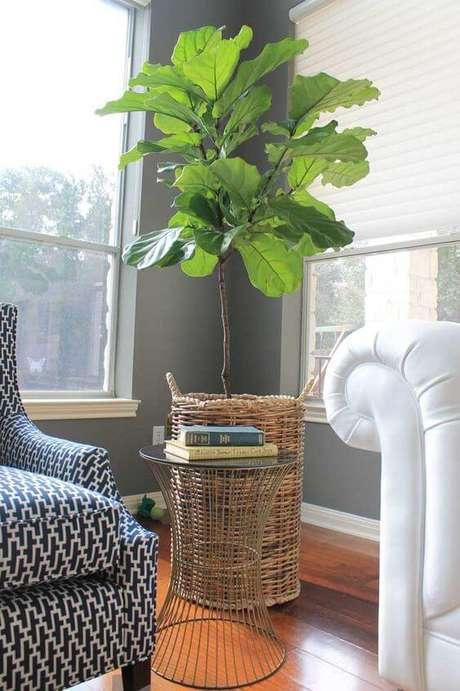 11. Plantas de sombra ciclanto – Foto: Simples Decoração