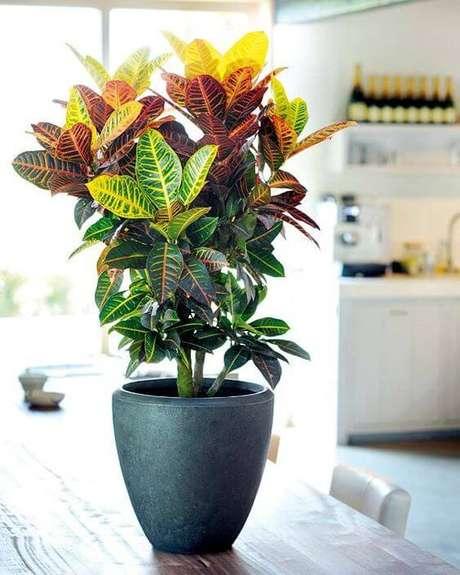 3. Plantas de sombra: croton – Foto: Pinterest