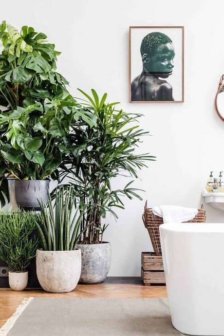 22. Plantas de sombra para casa – Via: Casa Vogue