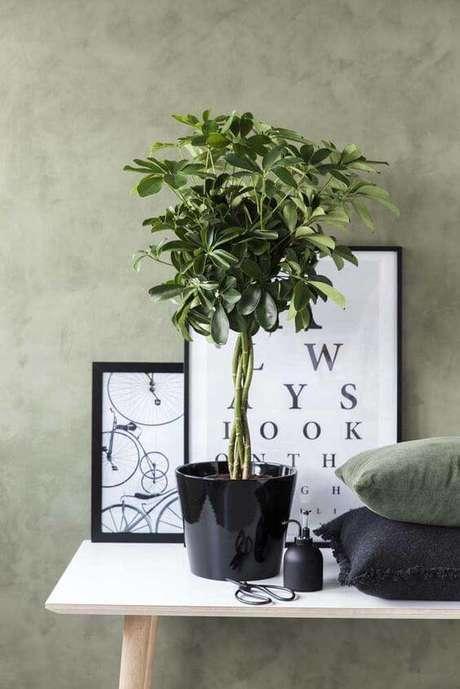 24. Plantas de sombra para decoração moderna – Foto: Decor Fácil