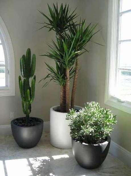 25. Plantas de sombra para casa – via: Homemila