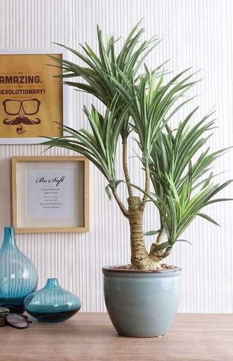 6. Plantas de sombra são lindas para decorar casa, como a Iuca – Via: Decor Fácil