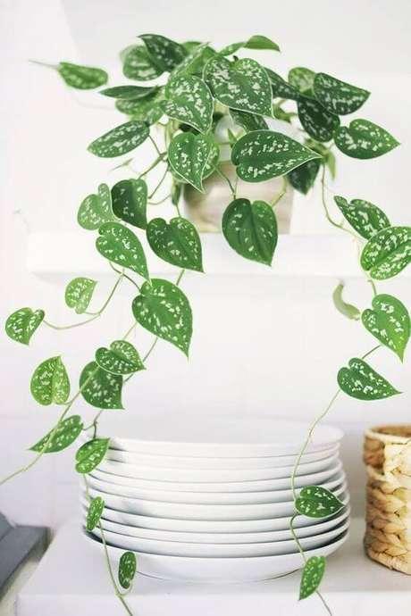 27. Plantas ornamentais de sombra, as mais lindas plantas de sombra – Foto: Casa Vogue