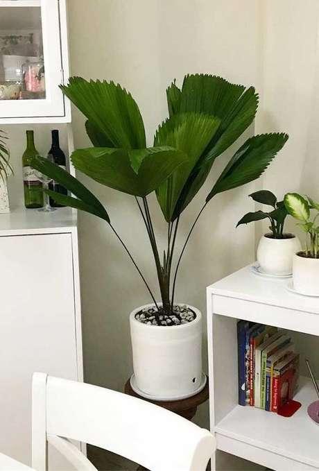 30. Plantas de sombra palmeira Ieque na decoração – Via: Decor Fácil