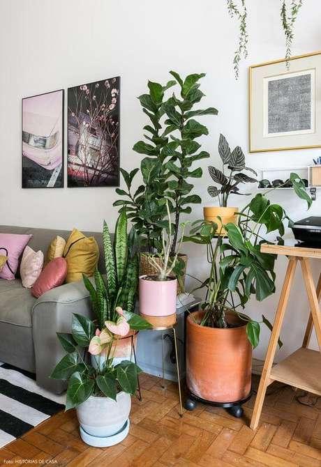 1. Plantas de sombra para casa: Antúrio e Costela de Adão – Foto: Histórias de Casa