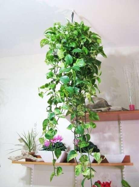 32. Plantas de sombra suspensa para decoração – Via: Curso Decoração Interiores