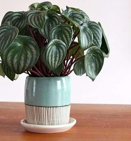 10. Plantas de sombra peperômia – Foto: Casa Vogue