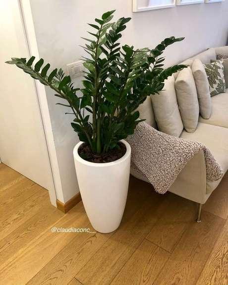 37. Plantas de sombra ao lado do sofá: Zamioculca – Foto: CLaudia Conc
