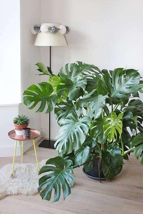 14. Plantas de sombra costela de adão – Via: Pinterest