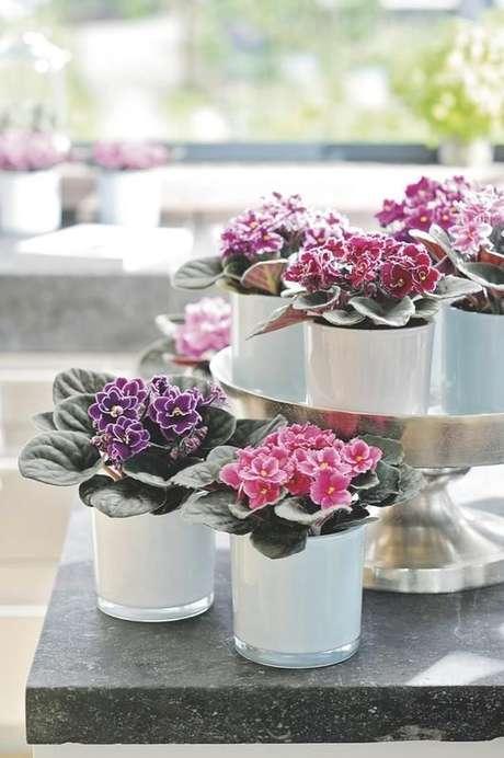 19. Violetas são plantas de sombra com flores maravilhosas para decorar sua casa – Via: Giuliana Flores