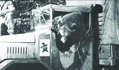 Wojtek ajudava os companheiros a descarregar os caminhões de munição. A insignia oficial do pelotão era uma homenagem ao urso