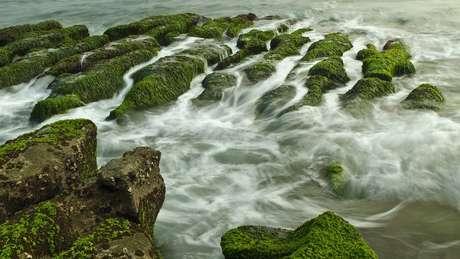 Essas algas poderão se tornar a comida do futuro?