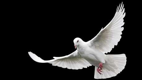 Duas vezes mais pombos do que falcões parece ser a proporção ideal