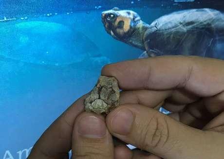 Fóssil foi encontrado em 2014, em Ibirá, interior de SP. Tecnologias ajudaram à definir que se trata de uma nova espécie
