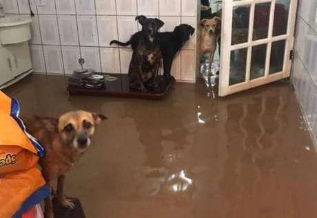 Unidade da ONG Amor em Patas, em Carapicuíba, é danificada pela força das tempestades que atingiram São Paulo.