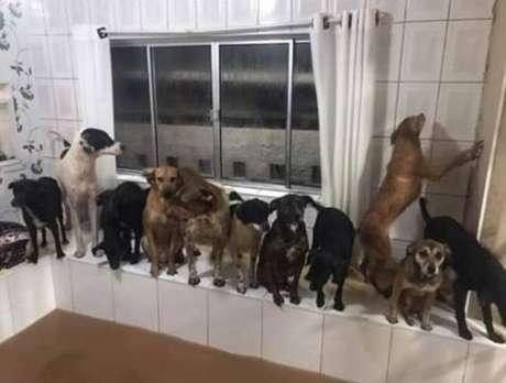 São 34 cães que foram atingidos pelos reflexos das enchentes em São Paulo nesta segunda, 10.