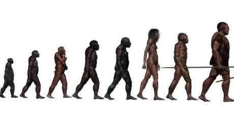 A história da evolução humana está se tornando mais complexa do que esta imagem indica