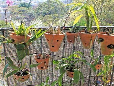11 – Orquídeas em vasos de barro de diferentes tamanhos, então veja como cuidar de orquídea.