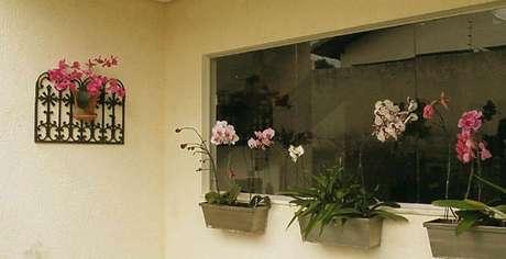 19– Como cuidar de orquídea em pequenas jardineiras na janela.