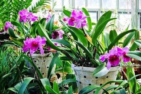 12 – Como cuidar de Orquídeas na varanda.