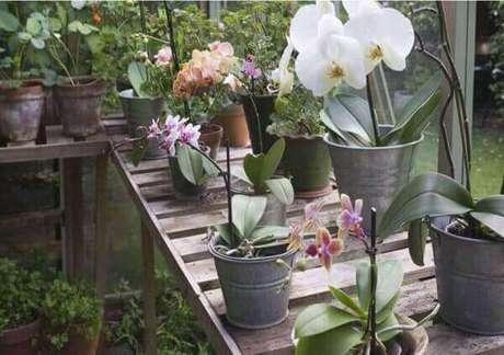 32- Cachepots com vasos de orquídeas, aprenda como cuidar de orquídea.