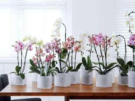 3– Aprenda como cuidar de orquídeas pequenas para decorar ambientes iluminados