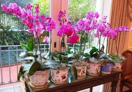 23-Coleção de orquídeas em cachepots, aprenda como cuidar de orquídea.