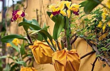 25- Como cuidar de orquídea penduradas.