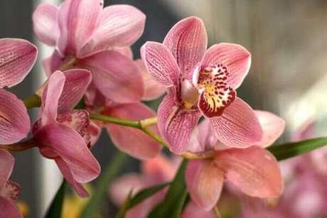13- Orquídeas em tons de rosa para decorar qualquer tipo de ambiente, então veja como cuidar de orquídea.