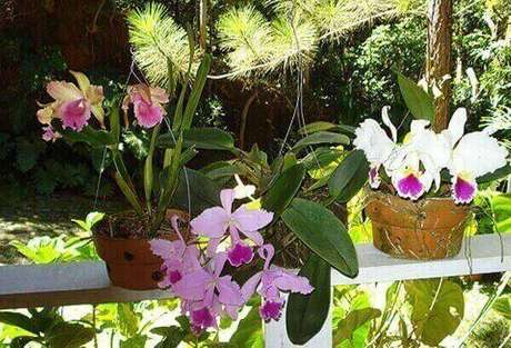 28- Varanda decorada com orquídeas coloridas, veja como cuidar de orquidea.