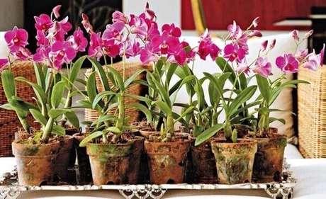 33- Como cuidar de orquídea em vasos de barro.