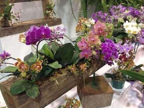10 – Veja como cuidar de orquídea na mesa da decoração.