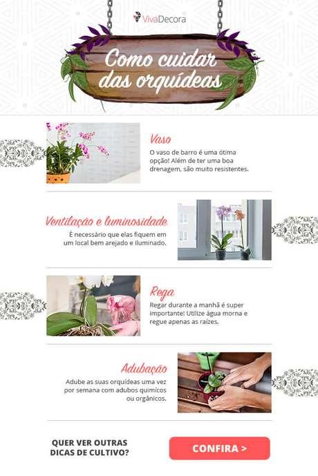 Infográfico – Como cuidar de orquídea