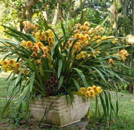 8- Vaso grande com orquídeas, aprenda como cuidar de orquídea.
