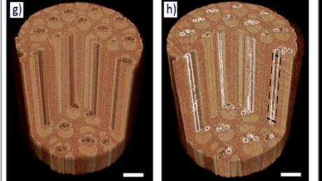 Radiografia mostra bambu in natura (à esq.) e com os microcanais pintados (à dir.)