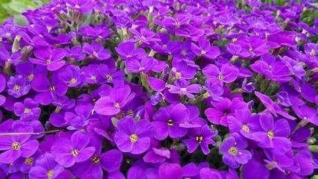 33- Desfrute da beleza das violetas. Fonte: Pinterest