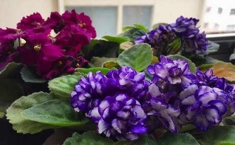 34- Mescle tonalidades e decore a casa com flores. Fonte: Pinterest