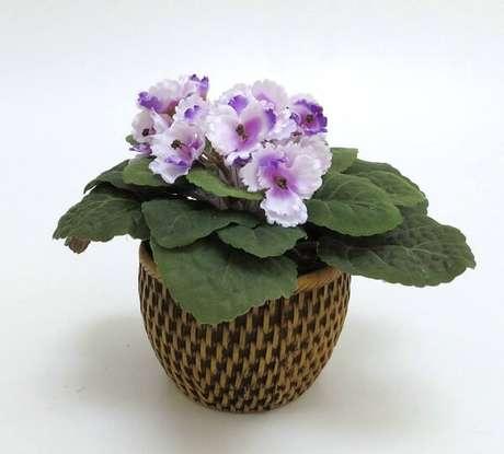 2- Como cuidar de violetas é uma tarefa bastante simples, enfeite as suas janelas com a delicadeza da violeta flor. Fonte: Pinterest