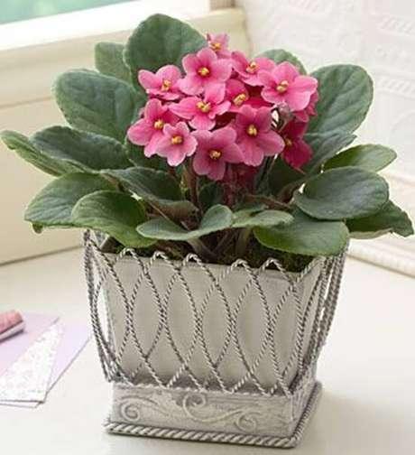 3- As violetas são consideradas plantas românticas e ideais para enfeitar diversos cômodos da casa. Fonte: Como Plantar e Cuidar