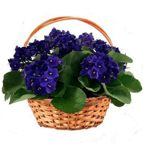 27- Os arranjos de violetas são ótimos presentes e cheios de significados. Fonte: Pergunte ao Agrônomo