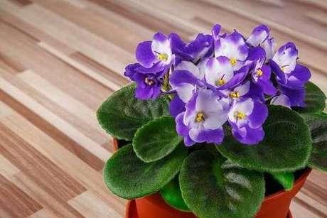 8- As violetas são plantas pequenas e ideais para decorar o banheiro. Fonte: Significado de Las Flores
