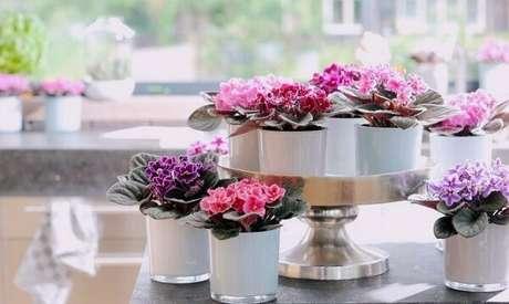 13- O evento foi ornamentado com vasos de violetas nos tons rosa, lilás, roxa e vermelha. Fonte: Sua Casa Sem Segredos