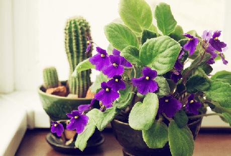 19- Decore as suas janelas com as variedades das violetas roxas. Fonte: Pinterest