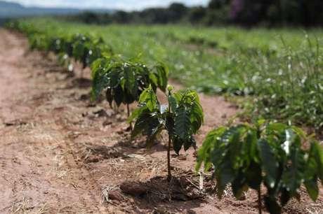 Plantação de café em São Sebastião do Paraíso, em Minas Gerais 22/04/2019 REUTERS/Amanda Perobelli