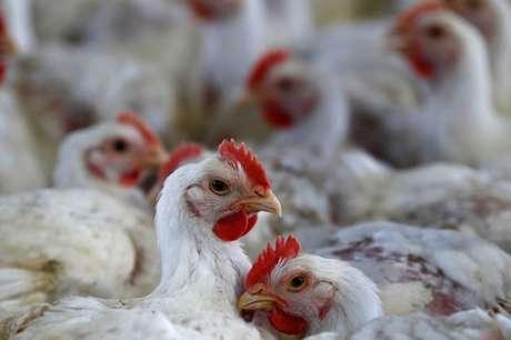 Criação de frangos em Lapa (PR)  31/05/2016 REUTERS/Rodolfo Buhrer
